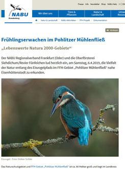 Eisvogel NABU Brandenburg