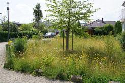 Falkingsviertel - 80 m² - Aussaat Mai 2020