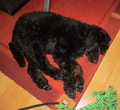 Hundeschule macht soooooo müde ;-)