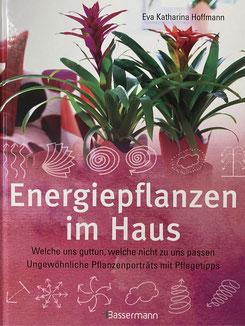 Holen Sie sich mit Pflanzen, die positive Energie im Haus. Welche Energiepflanzen tun uns gut und welche nicht zu uns passen.