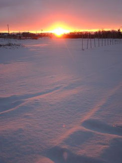白い世界の朝焼け。ハクチョウが飛び立ち始めました。佐潟周辺砂丘畑にて。(佐)