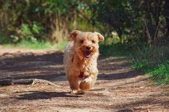写真:走っている犬