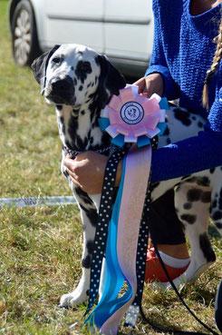 """Kryddhundens Ice-Prindess """"Mimmi"""" 4 Monate alt auf Ihrer ersten Ausstellung...18.09.2016"""