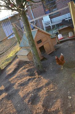 Unser Hühnerreich