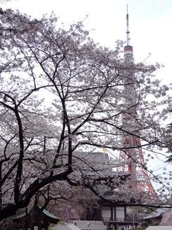 ドンちゃっくんさん:東京都港区芝公園・増上寺