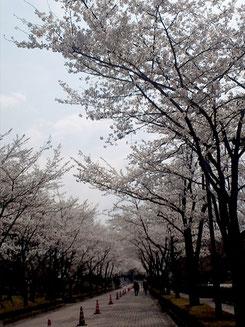 kayolinさん:福島県福島市