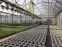 tablettes sub irrigation et sols de culture somahy gonti arrosage irrigation rampes. Black Bedroom Furniture Sets. Home Design Ideas