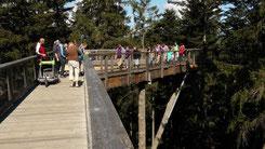 Weltweit längster Baumwipfelpfad Nationalpark Bayerischer Wald