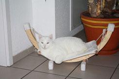Lassen Sie Ihre Katze gegen Katzenschnupfen impfen - Impfempfehlungen für Katzen