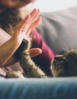 Katze gibt Mensch die Pfote