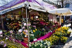 Viktualienmarkt à Munich - stand de fleurs