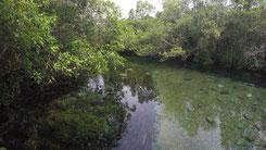 Rio Prata, Bonito, Pantanal