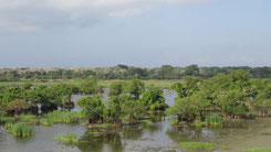 Kumana National Park, Kumana Nationalpark, Sri Lanka