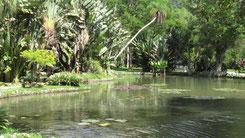 Jardim Botanico, Botanical garden Rio De Janeiro