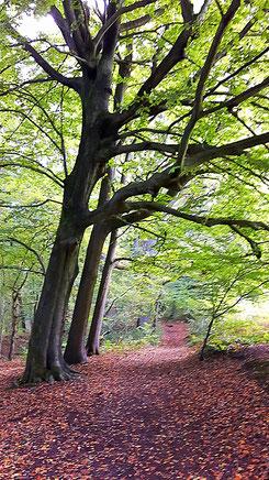 Bäume wirken beruhigend auf unser Nervensystem