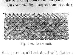 Le tramail - extrait des Animaux et mammifères marins - XIXème siècle