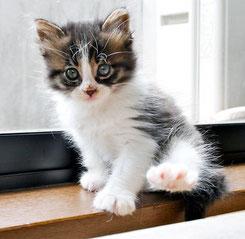 N0.17   2011.4.12       写真をクリック