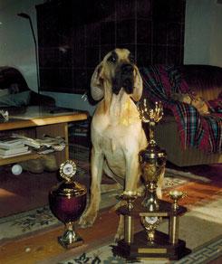 Gelbe Dogge Ausstellung mit Pokalen