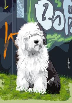 disegno-drawing-bobtail-cane-dog-digital-art-seduto-attento-sfondo-graffiti