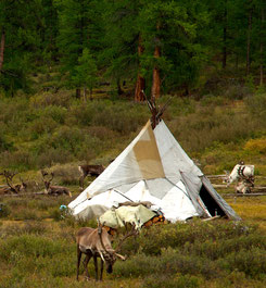 Tipi traditionnel pays Tsaatan