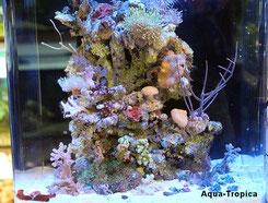 Nano-Meerwasser Aquarium
