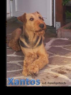 Xantos (2013)