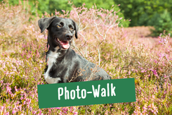 Hund beim Fotoshooting in der Heide nahe Hamburg
