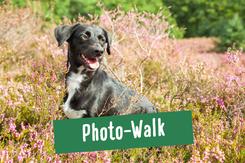Spaziergang an wunderschönen Orten mit Hunde-Shooting