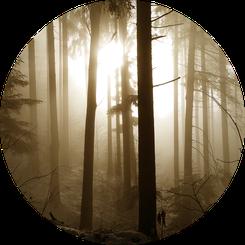 Wald mit Sonne und Nebel
