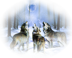 Животные зимой и их следы