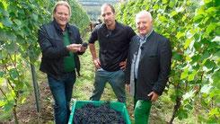 WDR - Senung Wein zum Fest. Vorkoster Björn Freitag  bei der Weinlese in Südbaden.