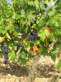 gite vignoble à embres et castelmaure