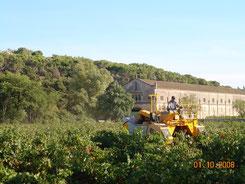 accueil vignoble aude à Narbonne