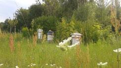 Warrè Bienenstöcke