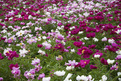 Winterlandschaft  (C) pixabay.com