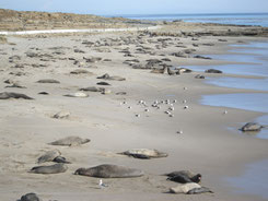 San Nicolas Island - courtesy and (c) Sustainable Power Systems