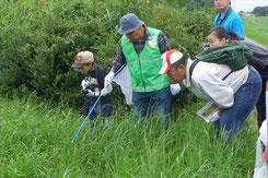 草にとまっているトンボを探す