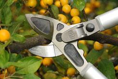 Obstbaumschnitt mit der Astschere Felco 231