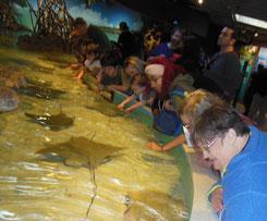 Boston Aquarium Stingray Touch Tank - Fun
