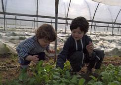 enfants La cueillette de cappy - Cappy - Somme - Picardie - Vallée de la Somme - Pays du Coquelicot- fruits et legumes de saison - producteur
