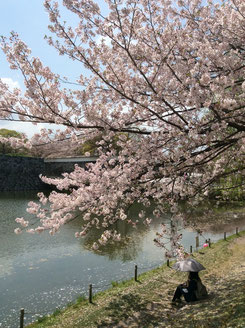 桜満開の日曜日