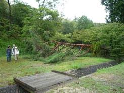 キャンプ場のアカマツも倒れました。