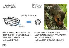 図3. クルミの進化