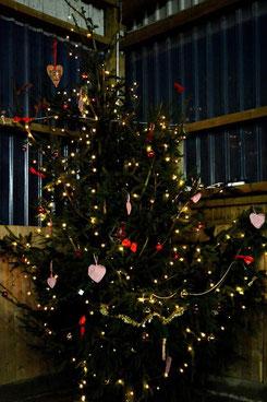 Der Baum in der Halle wurde von den Kindern liebevoll geschmückt!    Foto: Ingo Wächter