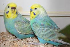 Leila und Chris - zwei Rainbows