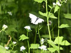 Lebensfreude-Trainerin Ria Kestel vor einem Nadelwald im Hintergrund Gebirge
