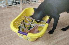 Schnüffelspiel zur Entspannung Hundephysiotherapie Heike Amthor in Leipzig Stötteritz