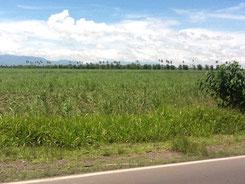 フィリピン バコロド