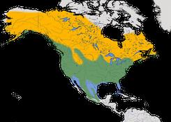 Karte zur Verbreitung der Wanderdrossel (Turdus migratorius)