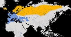 Karte zur Verbreitung der Rotdrossel (Turdus iliacus)